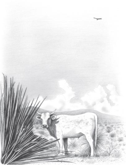 Illustration of desert cattle