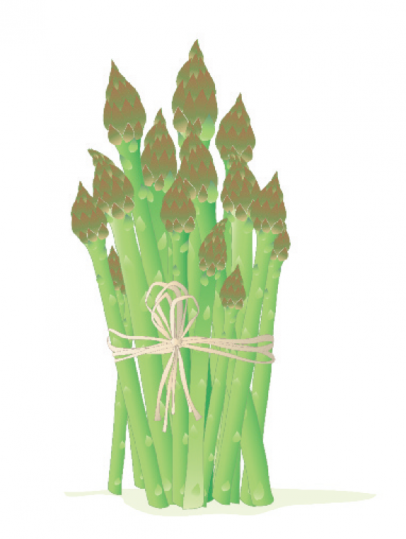 Asparagus illustration