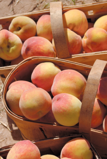 local peaches in a basket at the farmers market