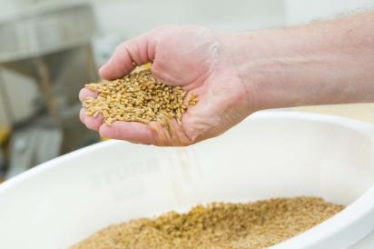 Arizona Wheat