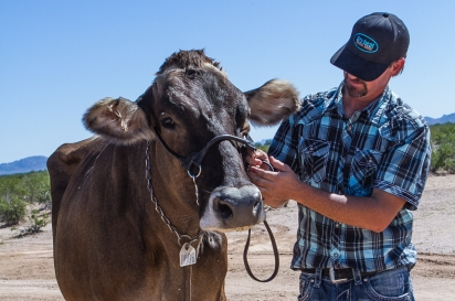 Rick Anglin with one of his dairy cows