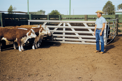 man with cattle on a farm