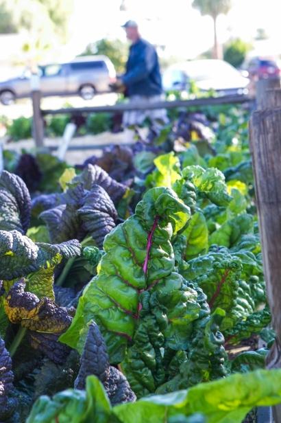 Farmyard urban garden