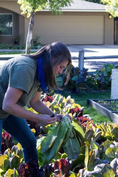 Produce picking at Farmyard