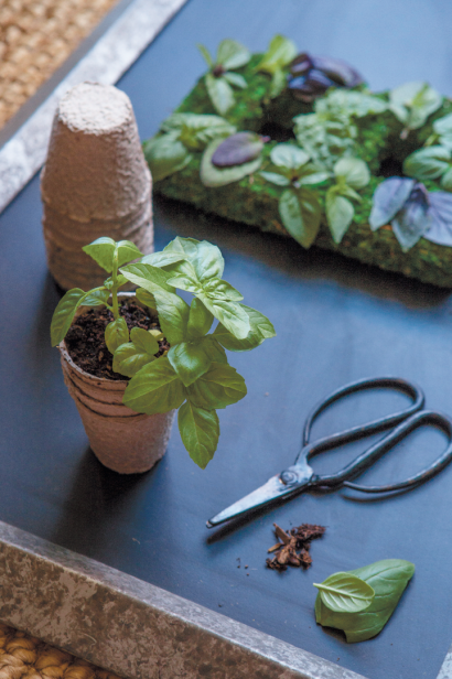 pruning a basil plant