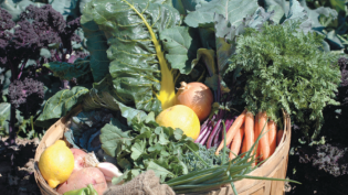 Vegetables in CSA share