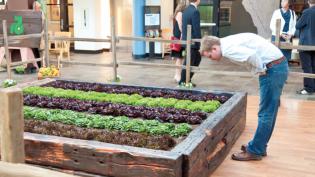 indoor lettuce crop, garden box