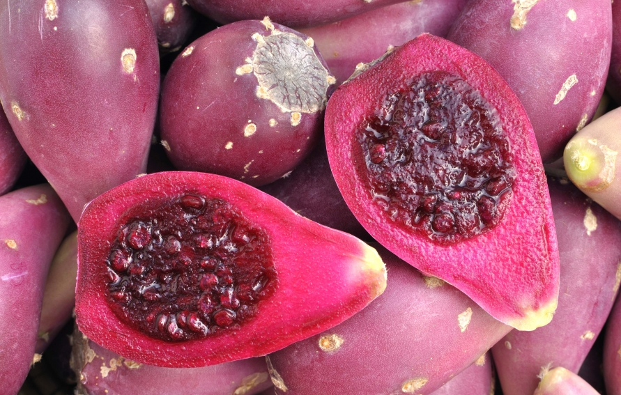 Prickly Pear Recipes Drink
